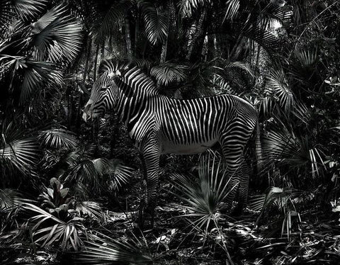FAZE Apparel - Fearless Pic of the Week - Fearless Friday - A Fearless Blend - Simen Johan - photographer - zebra and palm trees - art - 1