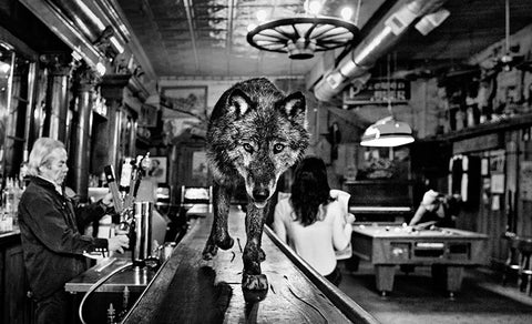 FAZE Apparel - Fearless Pic of the Week - Fearless Friday - David Yarrow - Photographer - The Wolf of Main Street - 1