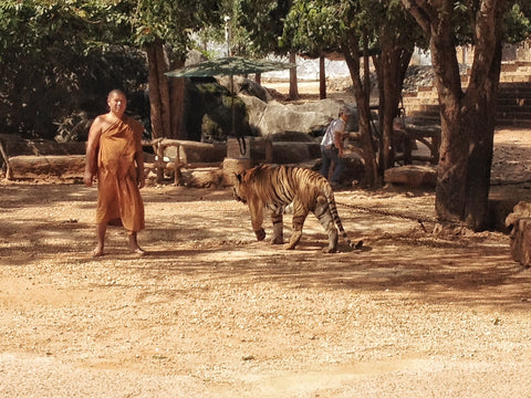 FAZE Apparel - Fearless Pic of the Week - Fearless Friday - Be Fearless, Stand Tall - Tiger Temple - Thailand - 1