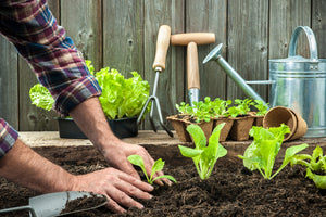 Tips about Vegetable Gardening this Summer