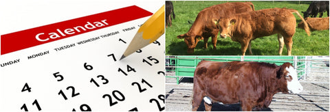4 ways to improve time management at calving season