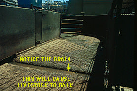 drain cow cattle chute path depth perception