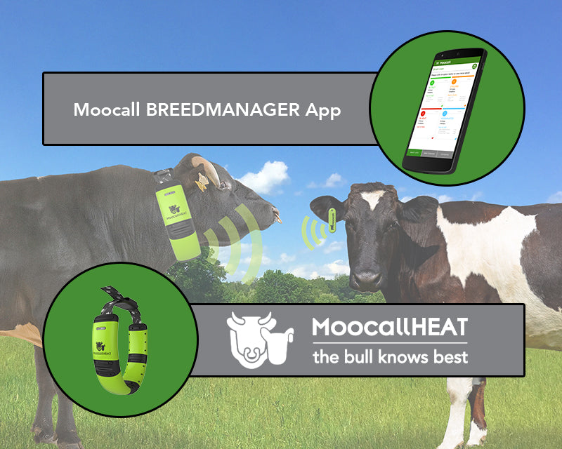 Moocall | Moocall - Connecting you to your Animals