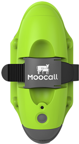 Moocall Calving Sensors measure contractions and predict when your cow will give birth.