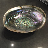 Decorative Shells - Abalone