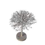Tea Tree Wood Bonsai Bleached White - Large