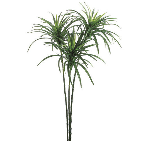 Dracena Spray X3 156L Green 43""