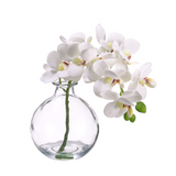 Faux Phalaenopsis Orchid in a Glass Vase