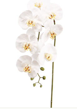 Artificial White Phalaenopsis Orchid Spray Stem 42""
