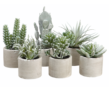 Succulent Garden in Cement Pot - Assorted