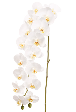 Faux White Silk Phalaenopsis Orchid Spray Stem 45""