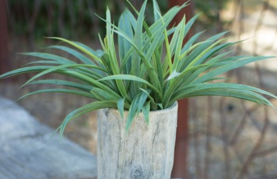 Tall Faux Elm Log Concrete Planters -Large