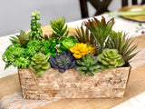 10PC Succulents