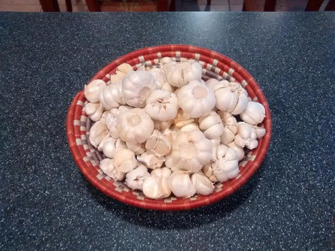 Raw garlic prepared for Aged Garlic Torshi (Seer)