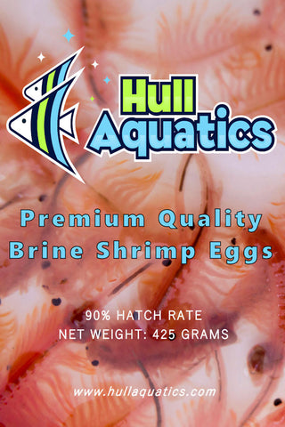 Hull Aquatics Brine Shrimp Hatching Eggs - 90% Hatch Rate - 100 Grams