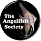 THE ANGELFISH SOCIETY (TAS)