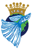 THE INTERNATIONAL FANCY GUPPY ASSOCIATION (ifga)