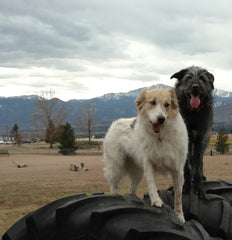 Sierra and Molly at Rampart Dog Park
