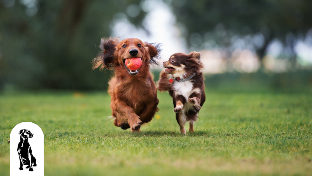 5 Reasons Why Dog Parks Benefit Both Dogs and Humans
