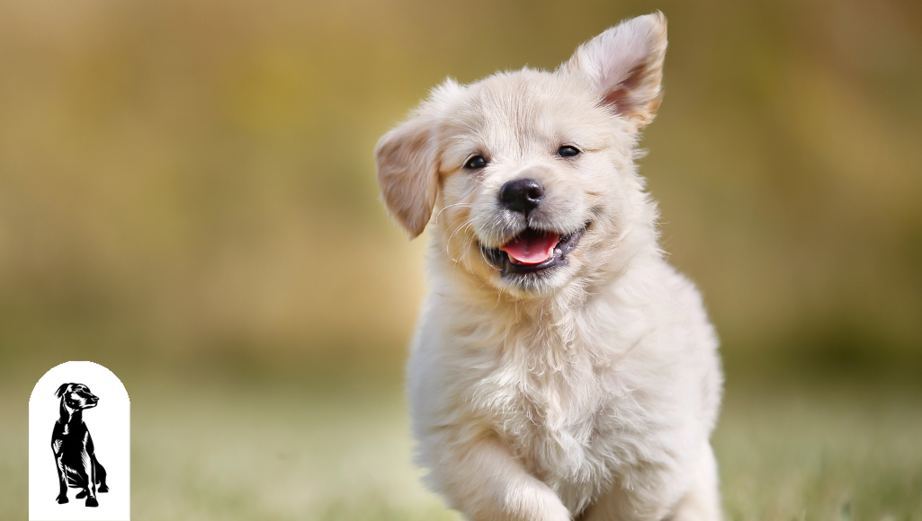 9 Amazing Facts About Puppies You've Never Heard