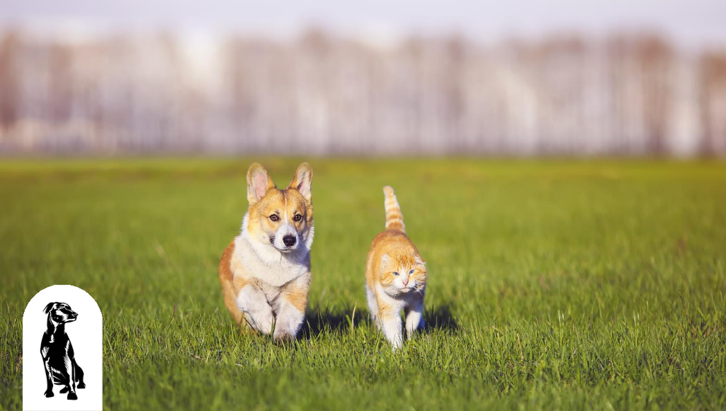 Can Corgis and Cats Get Along?