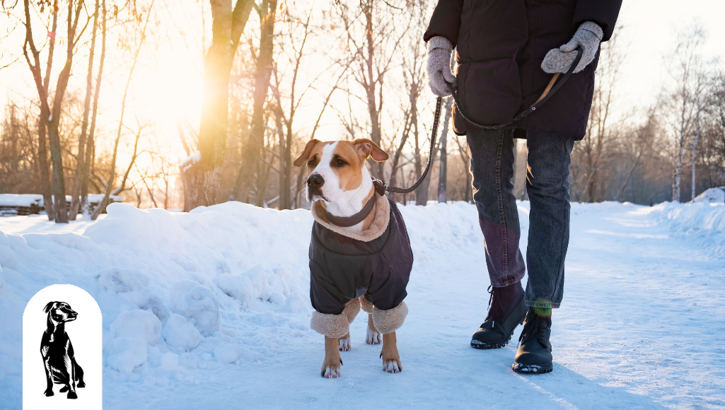 How to Keep Up With Walking Your Dog in the Winter