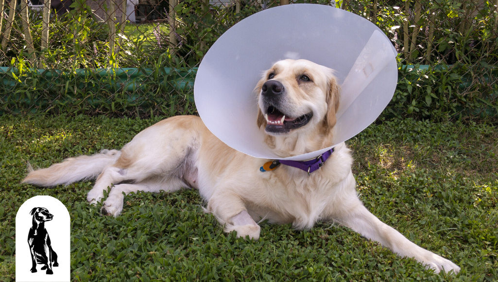 Spaying and Neutering: Why, When & Care After