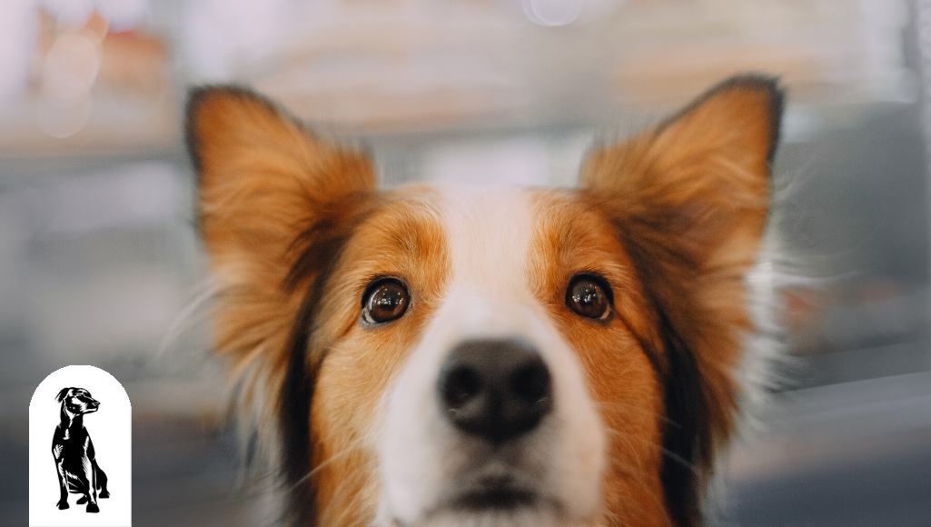 20 Incredible Facts About Your Dog's Hearing