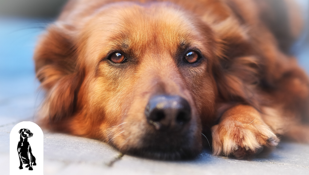 Through a Dog's Eyes: 20 Amazing Facts About Dog's Vision