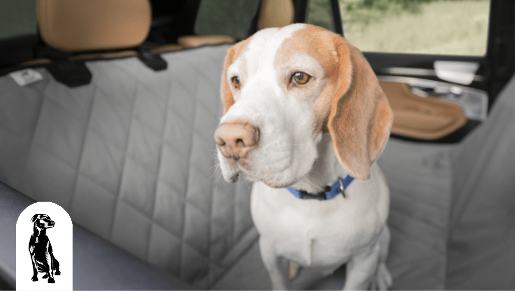 Top 5 Reasons Why You Need Dog Car Seat Protection