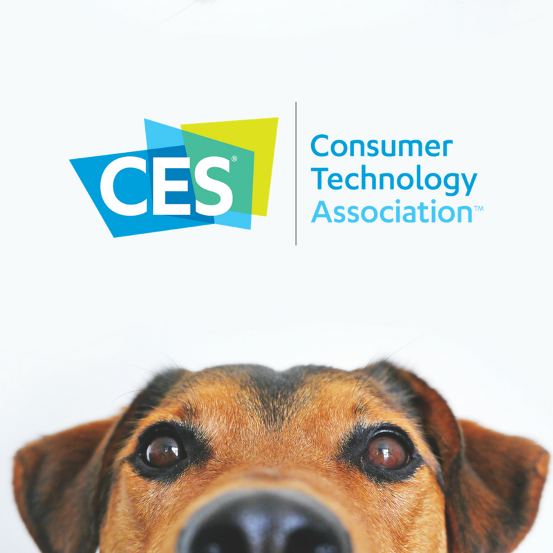 6 Cool New Pet-Friendly Tech At CES 2018