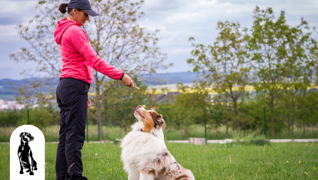 What Should I Look for in a Dog Trainer?