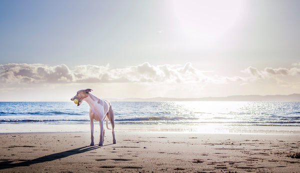 9 Summer Safety Tips for Dogs