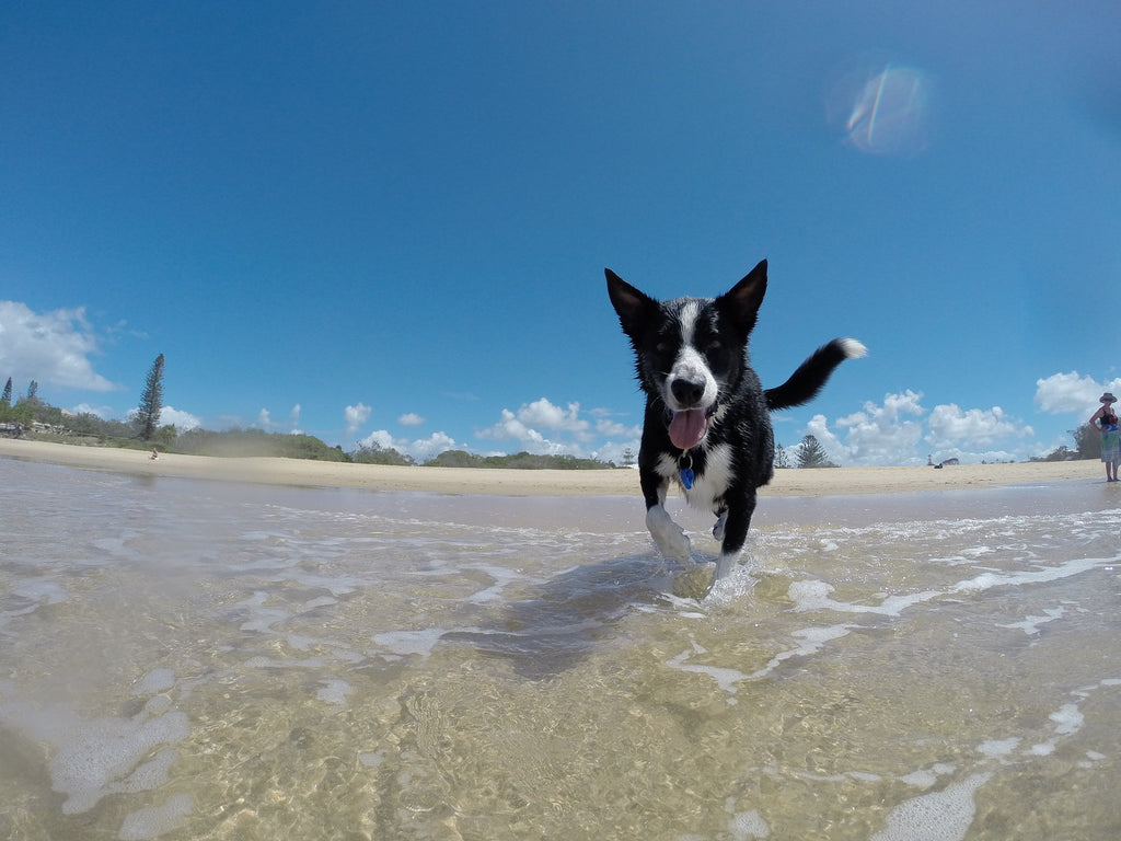Top 7 Tips for Flying with Your Dog