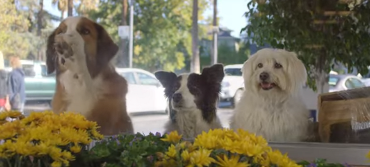 These Dogs Will Do Just About Anything to Get Their Treats!