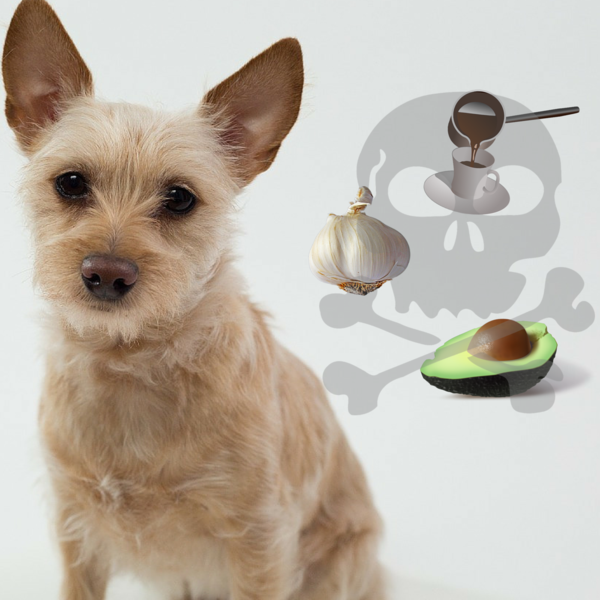 These Foods Could Be Fatal To Your Dog