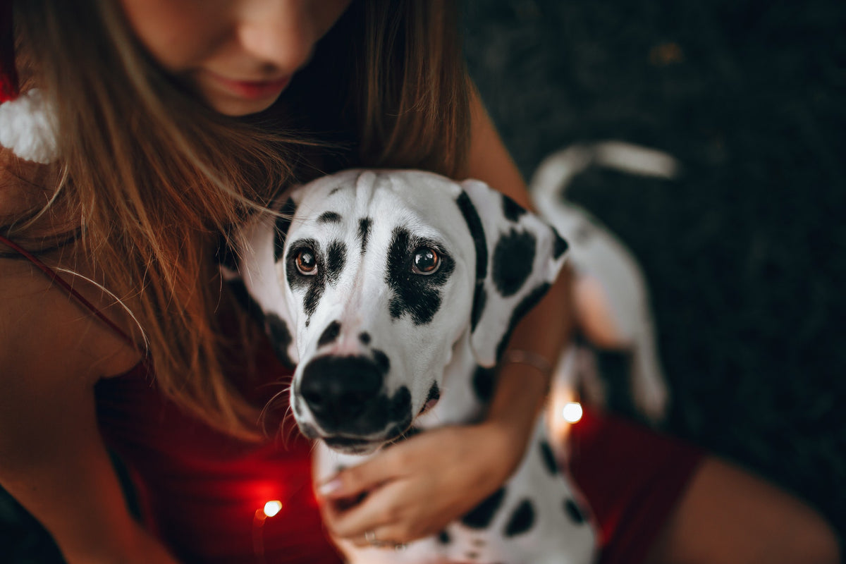 6 Reasons Why Your Dog Should Be Your Valentine This Year