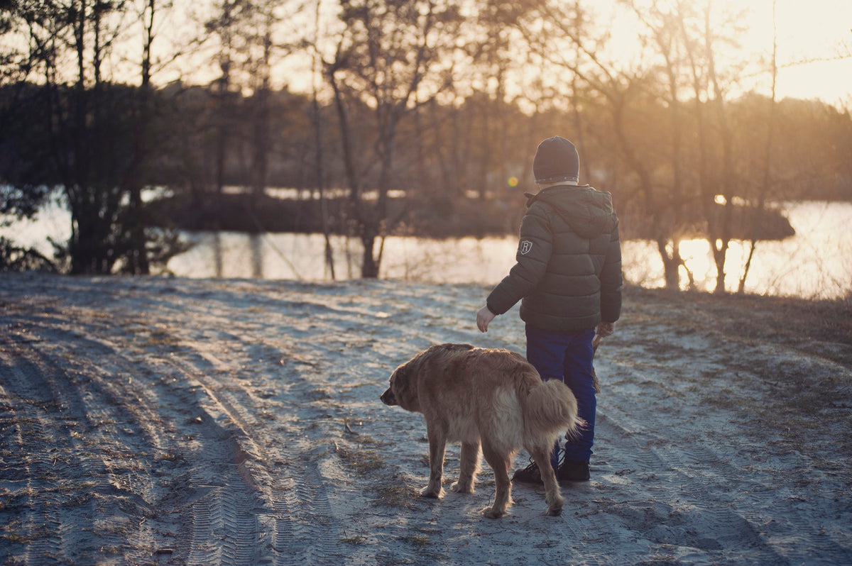 How to Keep Your Dog Safe Throughout The Winter Season