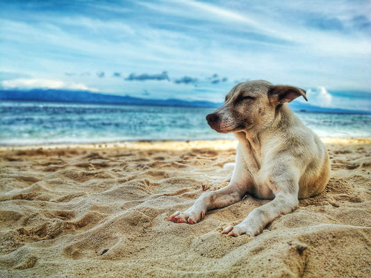 Five Best Dog-Friendly Travel Destinations