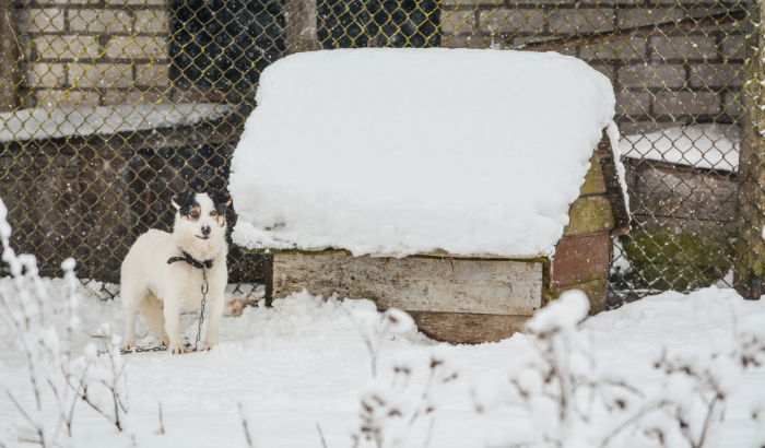 Can Dogs Stay Outside in the Winter with a Dog House?