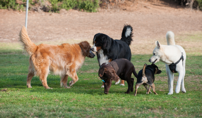 Causes of Social Anxiety for a Dog