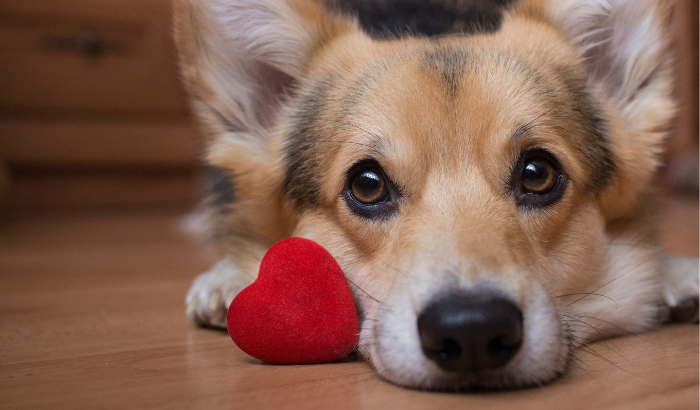 Dog Parents Take Valentine's Day Very Seriously