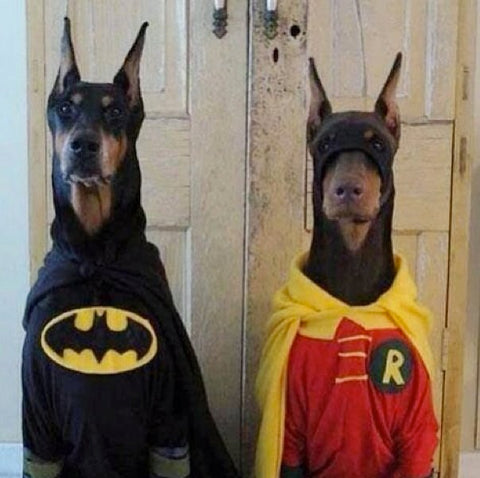 batman and robin dog Halloween costume