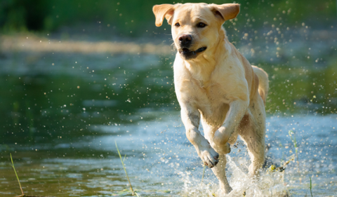 Fun Facts About Dogs - 28 Facts in Total!