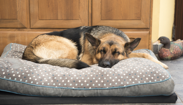 How Do I Choose the Right Dog Bed?