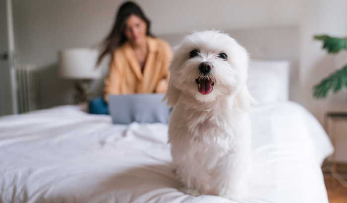 Other Breeds of Allergy-Friendly Dogs