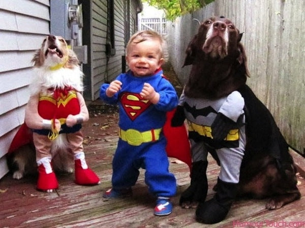 batman superman wonderwoman dog Halloween costume