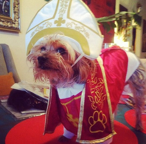 the pope dog Halloween costume