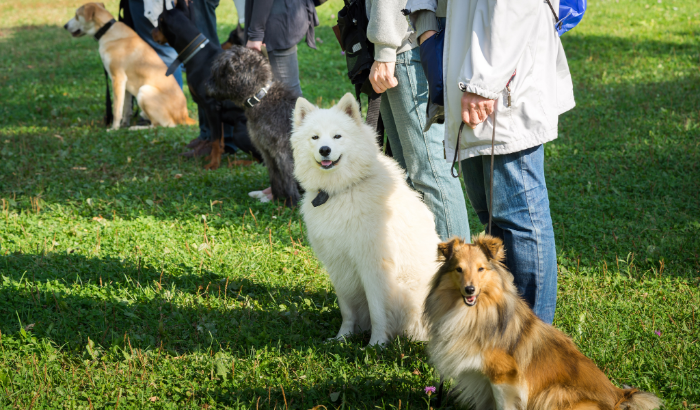 How Do You Treat a Dog with Social Anxiety?