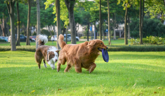 What's the Big Deal About Dog Parks?